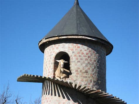 Cool Animals Pictures: The Goat Tower